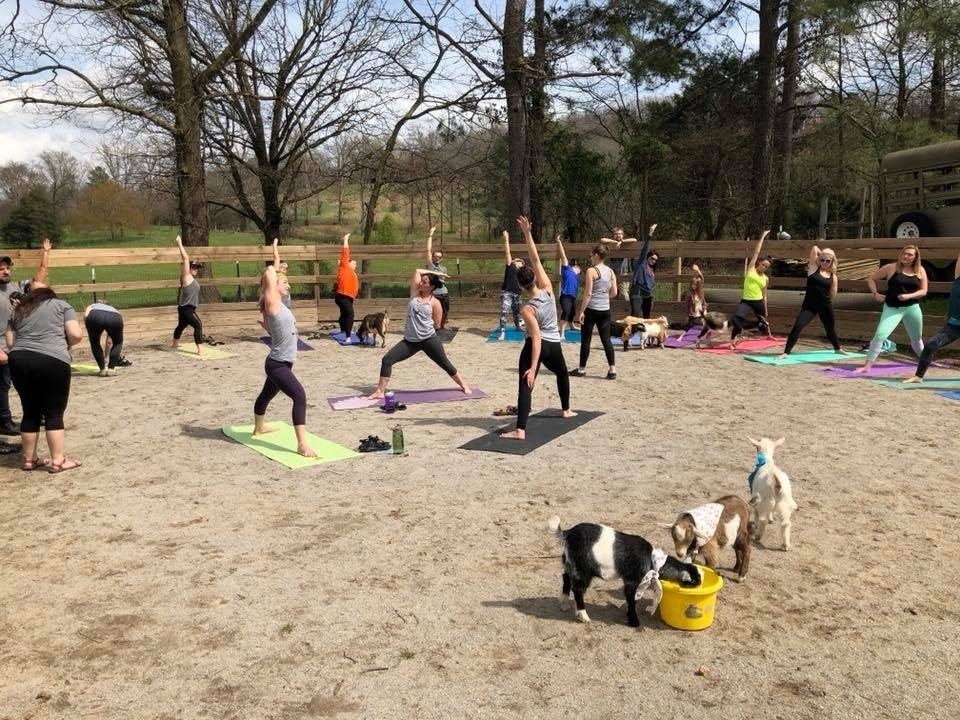 Thrive Goat Yoga